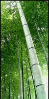 Bamboo Forest by sonicc
