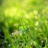 Dewdrop Magic by ElyneNoir
