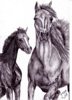Horses2 by LadyWera