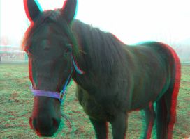 The Horse 3D Anaglyph by yellowishhaze