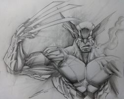 Wolverine sketch-- by Sandoval-Art