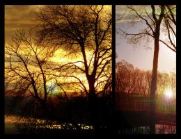 Unnatural Sunset Trees by dianerz817