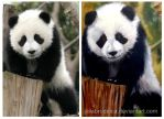 Giant Panda - photo and paint by jolabrodnica