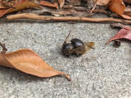 death of a bee3 by voider00
