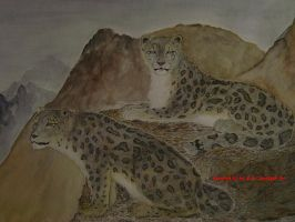 Snow Leopards by squidink