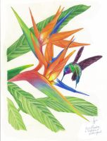 Bird of Paradise and Hummingbird by riverfox1