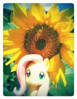 Sunny Fluttershy by LAUBoZ