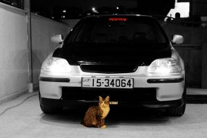 Honda And a Cat by AbedArslan86