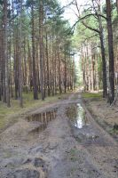 Forest reflection by Risandell