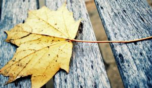 One less lonely leaf by sudorlais