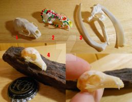 Clearing Sale - Skulls and Bones by Shamans-Yoik