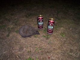 Hedgehog's favorite drink by homo-vulgaris