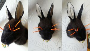 WIP Rabbit head mount by DeerfishTaxidermy