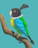 Realistic Chatot by illucian