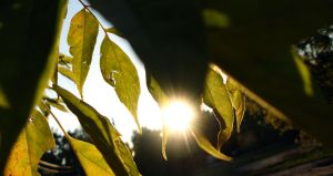 Hole in the leafs. Sunshine. by Kr4mon