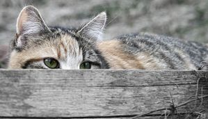 Stalking Kitteh by hutzimbl