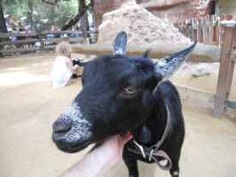 Frontierland Goat by Dogman15