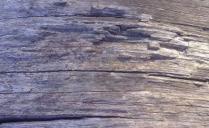 Wood_3 by mr-texture