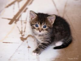 This Cute Little Kitten by Swanee3