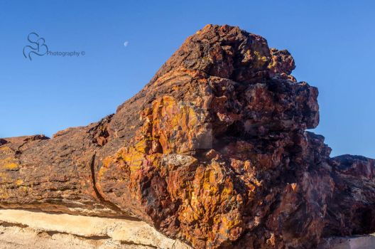 Petrified by ShannonBPhotog