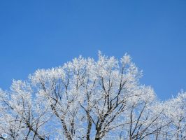 Iced branches by Eruanna17