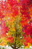 Colorful Tree by Bimmi1111