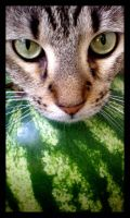Cat and Watermelon II by JacquiJax