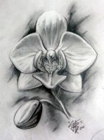 Orchid in Graphite by Sirius-Tattoo
