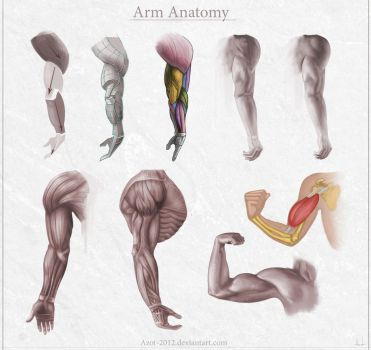 Arm Anatomy by Azot2017