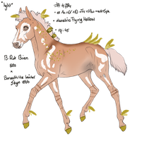 4784 Padro Foal Design by AshtreeCreekStables