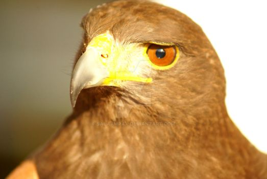 Aguila by SalaamPax