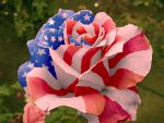 photoshop rose flag by Liquidwizard