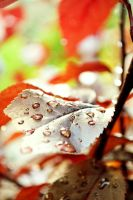 After Rain by Ithil-Tinu