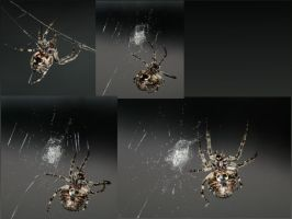 Spider Sequence by Polyrender