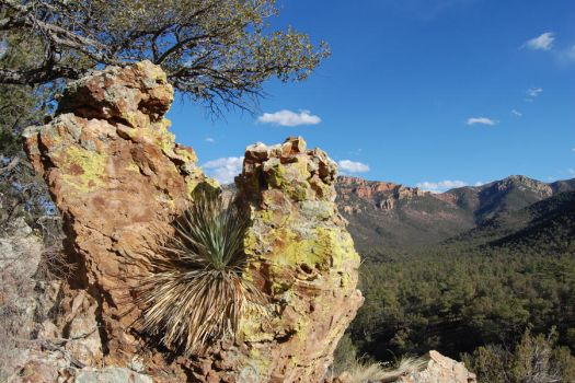 Chiricahua Framed by Forest-Imp