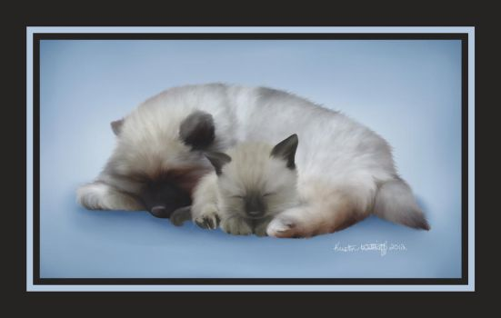 Keeshond and Siamese: Naptime by liengod