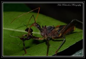 Assassin Bug by DesignKReations