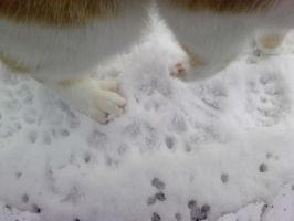 Cats paws in snow by Toph-Rulz16