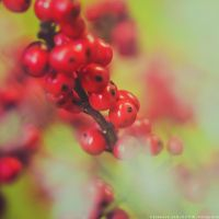 the last red berries by CliffWFotografie