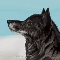 Black Wolf - painting by Griffin-Fire