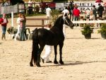 Friesian 042 by CitronVertStock