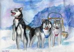 Huskies by Le-ARi