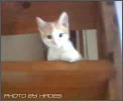 Tommy On The Stair by HadesDiosSupremo