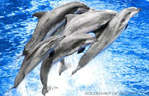 Dolphins by Golden-Rey