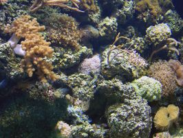 Coral Reef by Malakhite
