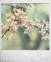 Polaroid 04282 by Couleur345