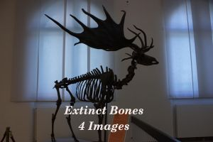 Extinct Bones Package by bookscorpion