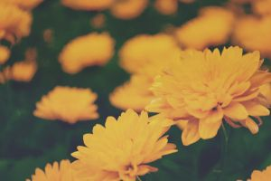 autumnal blossoms fall by Paolme