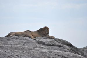 africa pic1 by davidsdoodles