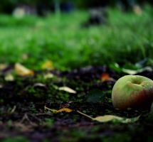Fallen Apple by EmersonStem